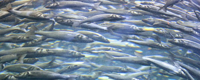 Fish Cropped 1 800x200